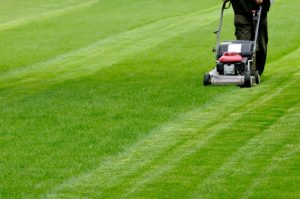 Quick and Easy Lawn Mowing and Maintenance for your Home
